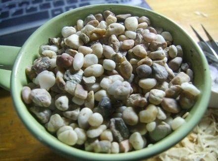 plantando-limao5.jpg