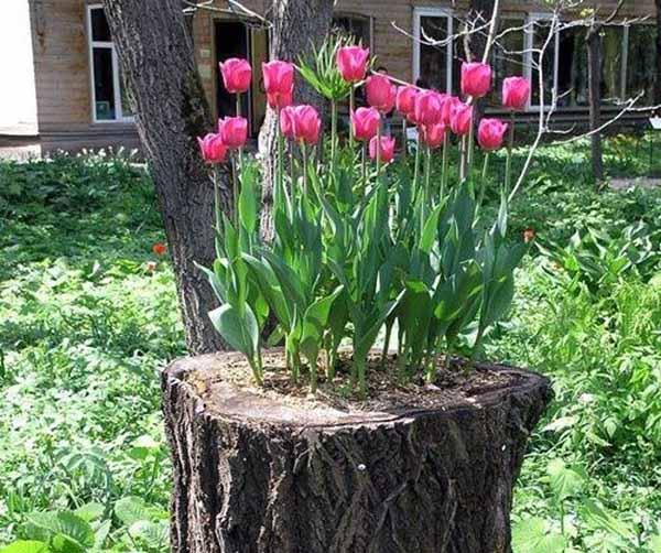 ideias originais jardim : ideias originais jardim:Como criar lindos canteiros de flores em troncos de árvores