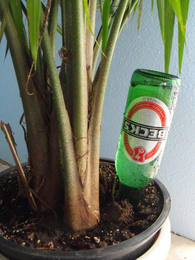 maneiras-de-reutilizar-as-garrafas-de-cerveja-7