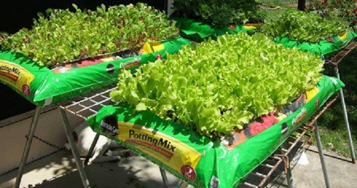 cultivar_a_propria_horta_e_jardim_-_sem_espaco