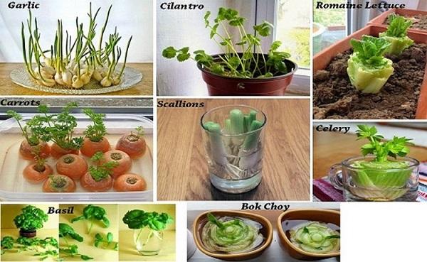 plantar_vegetais_casa