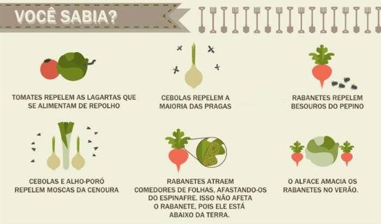 vegetais_em_casa5