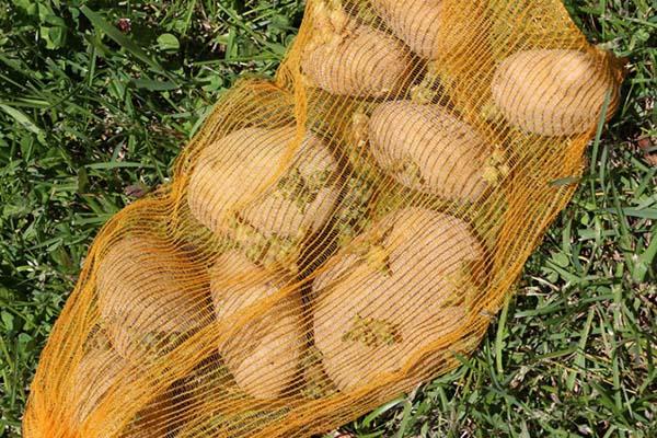 saco-batatas1