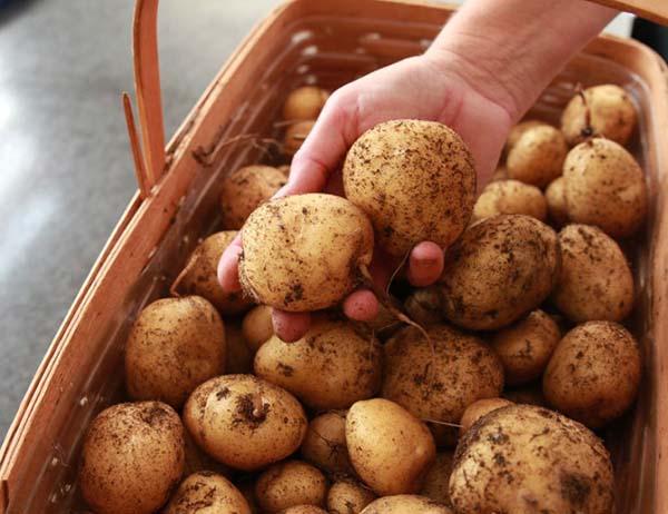 saco-batatas13