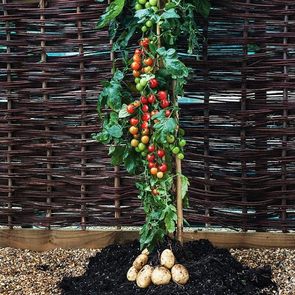 3018867-inline-750-tomato