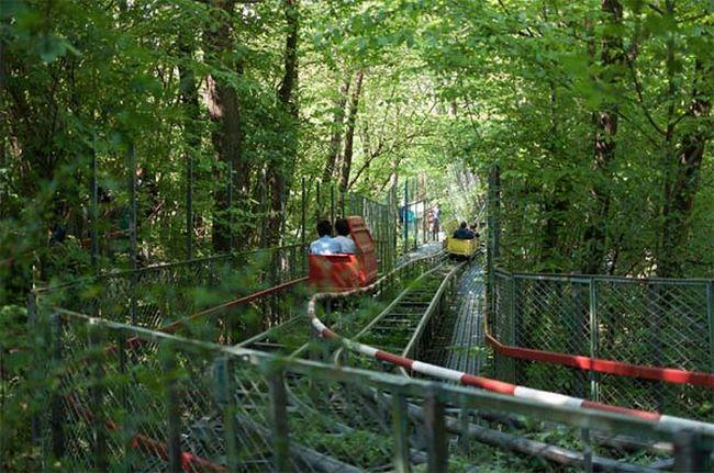 construção na floresta (2)