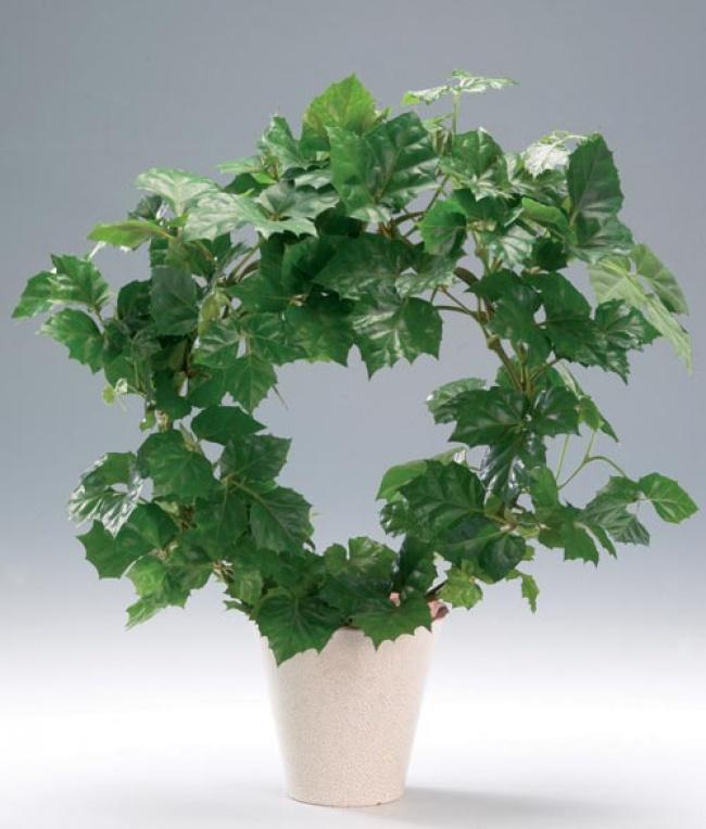 planta9
